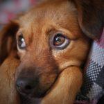 一人暮らしの孤独や寂しさにはペットを飼うのが効果的。一人暮らしの人がペット飼うときのコツについて。